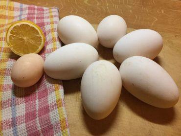 násadová vejce